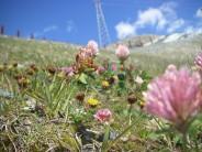 Flower in front of italian mountain
