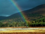 At the end of the rainbow...lies a bonnie tree in Glen Feshie.