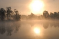 Morning in Fontainebleau