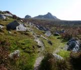 Delectable Dartmoor