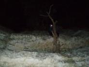 Ornithology by night