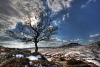 Lonely Tree at Burbage South