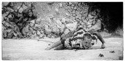 Tom Ireson battling his way up Ace Ventura, 8a/8a+ El Chorro, Spain<br>© patrickpearce