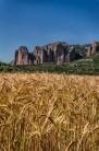 Riglos corn fields