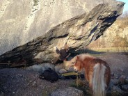 Getting spotted by one of the locals on Pit Problem, Trowbarrow