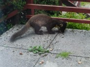 Pine Martin - Spean Bridge