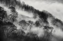 Wood Hill mist