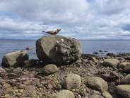 Seal boulder