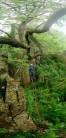Tom halfway up the overgrown but fun Long Climb Variants