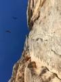 Vultures<br>© benw681