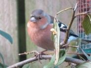 Taken in back garden with new camera!