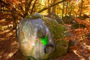 Autumn Fontainebleau<br>© Rambo of Bethlehem