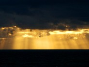 Poor quality (maximum zoom plus 'digital' zoom) sunset and Herring Gull, Chesil Cove, 15:50, November 12th 2006.