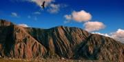 Buzzard below Cloggy<br>© Sean Kelly