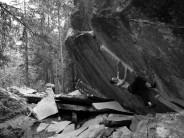 The eye-catching line of Wonderboy, Magic Wood