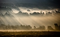 Beauty in the Back Yard, Morning Light, Longshaw Estate, Derbyshire