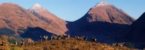 Etive Locals, with the twa Buachailles in the background..
